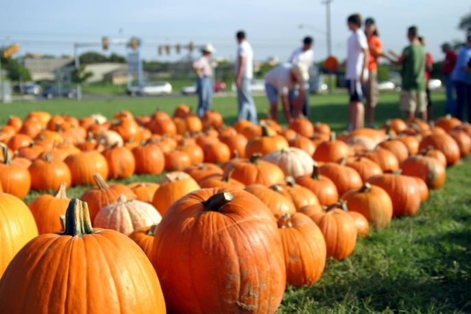pumpkin patch pic